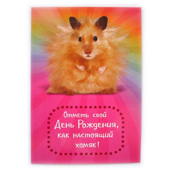 Днем рождения, открытки с днем рождения с хомяками